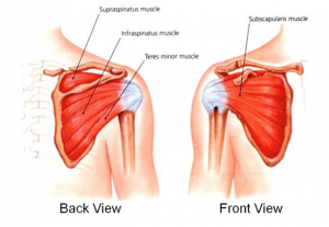Stem Cells for Rotator Cuff Tears