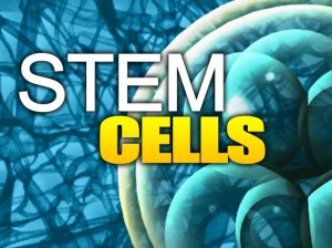 Stem Cells for Spinal Disc