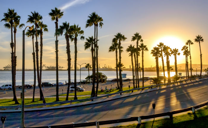 Beautiful view of palm trees lined on Long Beach